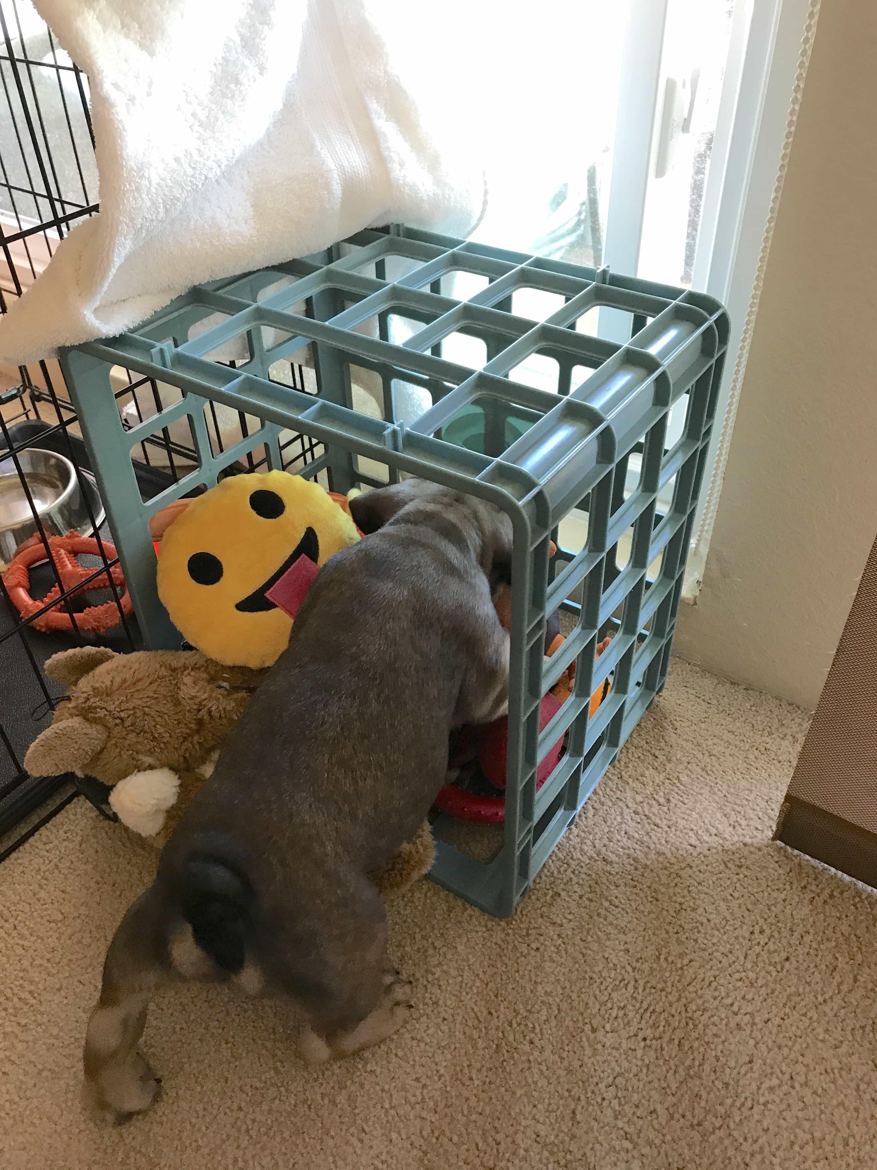 Toy Box Training Tool!